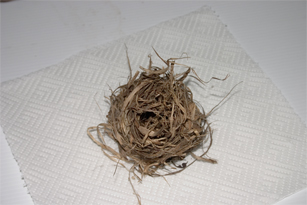 Summer dormouse nest made from clematis bark